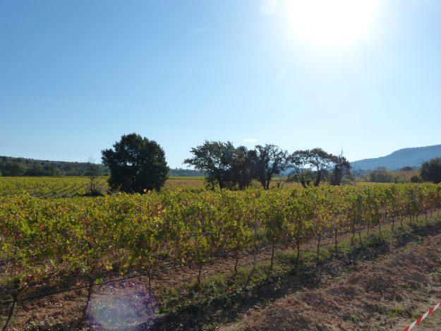 Des vins de la Sainte-Victoire à découvrir