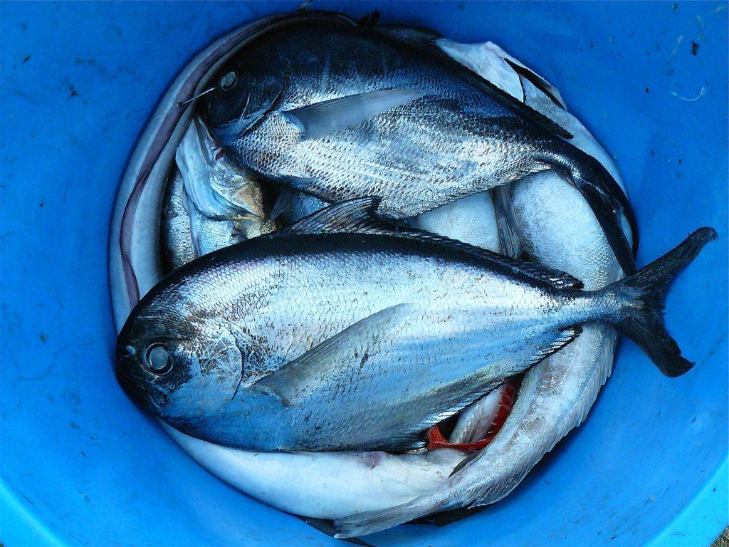 peche responsable poissons