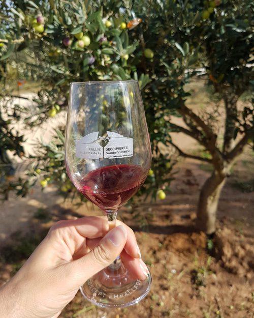 A la découverte des vins de la Sainte-Victoire !